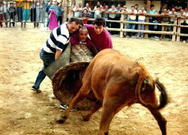 El toro encestao